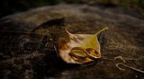 Alianças de casamento do ouro e folhas de outono românticas amarelas Casamento no estilo rústico Imagens de Stock Royalty Free