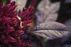 Alianças de casamento do ouro em flores do amaranto Imagem de Stock Royalty Free
