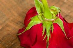 Alianças de casamento do ouro em uma rosa vermelha Imagem de Stock Royalty Free