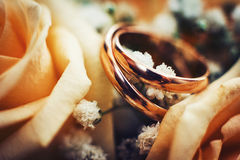 Alianças de casamento do ouro nas rosas Fotografia de Stock Royalty Free