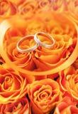 Alianças de casamento do ouro nas rosas alaranjadas Fotos de Stock Royalty Free