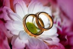 Alianças de casamento douradas nas flores brancas e roxas da mola imagens de stock royalty free