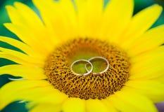 Alianças de casamento e rosas Fotos de Stock