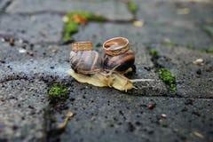 Alianças de casamento em caracóis Beijo dos caracóis fotografia de stock royalty free