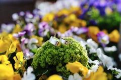 Alianças de casamento, em flores coloridas fundo Fotografia de Stock Royalty Free