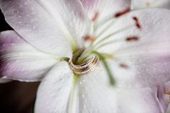 Alianças de casamento em um botão do lírio fotos de stock