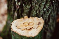 Alianças de casamento em um coto Foto de Stock