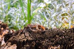 Alianças de casamento em um coto de árvore Imagem de Stock