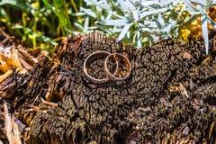 Alianças de casamento em um coto de árvore Foto de Stock