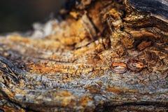 Alianças de casamento em um log estrutural, madeira Fotos de Stock