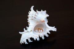 Alianças de casamento em um shell Imagens de Stock