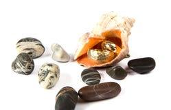 Alianças de casamento em um shell do mar Imagens de Stock