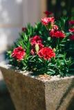 Alianças de casamento em uma cama de flores Fotos de Stock Royalty Free