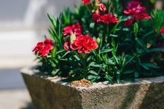 Alianças de casamento em uma cama de flores Imagem de Stock Royalty Free