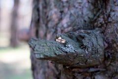 Alianças de casamento em uma casca de árvore Imagens de Stock