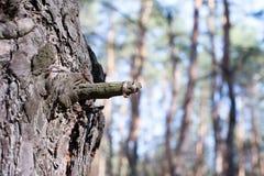 Alianças de casamento em uma casca de árvore Imagem de Stock Royalty Free