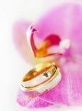 Alianças de casamento em uma orquídea Imagem de Stock Royalty Free