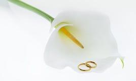 Alianças de casamento & lírio de Calla Imagem de Stock