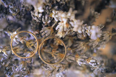 Alianças de casamento na alfazema secada Fotos de Stock