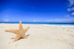 Alianças de casamento na estrela do mar Fotos de Stock Royalty Free
