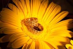 Alianças de casamento na flor amarela do gerbera Imagens de Stock Royalty Free
