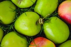 Alianças de casamento na maçã verde Imagens de Stock