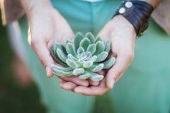 Alianças de casamento na planta carnuda nas mãos Foto de Stock Royalty Free