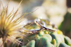 Alianças de casamento nas cores de um cacto Foto de Stock Royalty Free