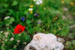 Alianças de casamento nas pedras na grama e nas papoilas vermelhas no Fotografia de Stock Royalty Free