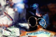 Alianças de casamento no aquário com peixes coloridos Fotografia de Stock