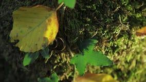 Alianças de casamento no mosa e folhas em uma casca de árvore Joia no casamento vídeos de arquivo