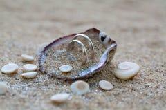 Alianças de casamento no shell do mar na praia coral fotografia de stock royalty free