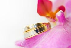 Alianças de casamento & orquídea Imagem de Stock