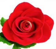 Alianças de casamento & Rosa Imagem de Stock Royalty Free