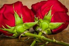 Alianças de casamento unidas às rosas vermelhas Fotografia de Stock