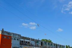 Alianti della corda in vecchio porto, Montreal Fotografia Stock