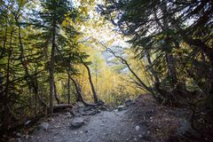 The Alibek valley forest Stock Images