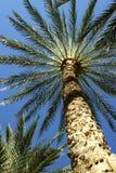 Alicante. Palms in sea-front of Alicante Stock Photos