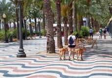 Alicante, Espagne - 30 juin 2016 : La promenade Explanada de l'Espagne dans Alicante est pavée avec 6 5 millions de plancher de m Image stock