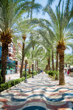 ALICANTE - JULY 12, 2015: Palm alley at Alicante SPAIN in hot su Stock Image