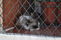 Alicante. Spain. A cat having rest behind the bars. Royalty Free Stock Photo