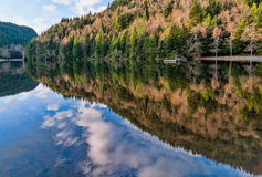 Alice Lake Forest Reflection Stock Photography