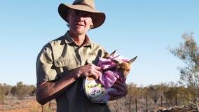 Kangaroo joeys of Alice Springs Sanctuary