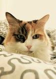 Alice, the thinker royalty free stock photo