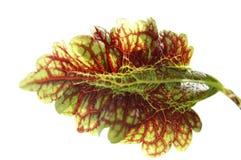 alien листья стоковая фотография