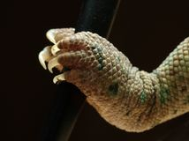 alien рука Стоковые Фотографии RF