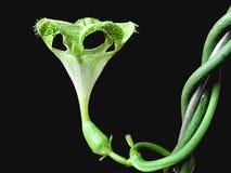 alien цветок Стоковое фото RF