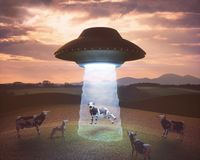 Alien Abduction On The Farm. Cow on the farm being pulled by the tractor beam of the alien spacecraft stock illustration