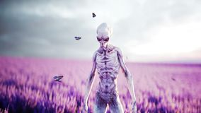Alien with butterflies in lavender field. concept of UFO. Realistic 4k animation. Alien with butterflies in lavender field. concept of UFO. Realistic 4k stock video