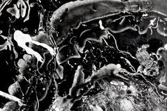 Alien creature attack in space. Abstract painting Alien Black and white Stock Image